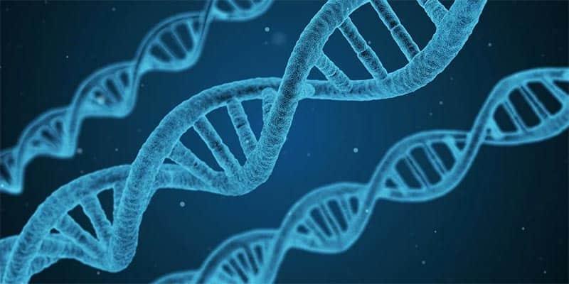 Secret DNA test
